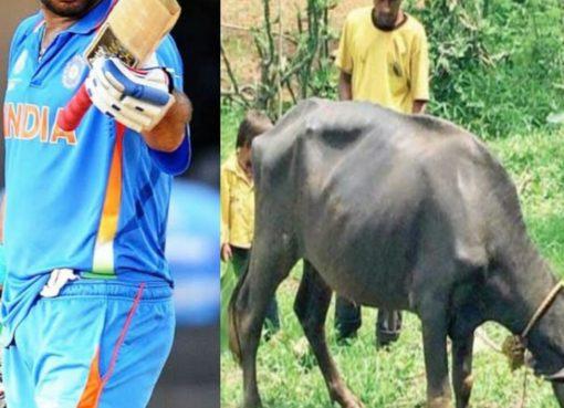 Babaji Damor Cricket India 1998