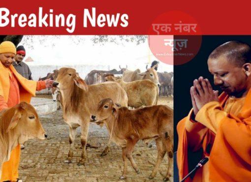Yogi Government Cow Law