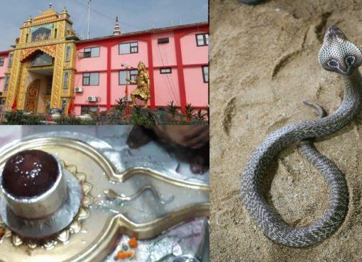 Sangameshwar Mahadev Haryana Snake Story