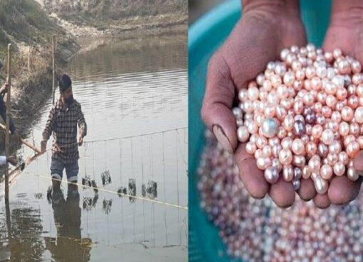 Nitin Bhardwaj Pearl Farm