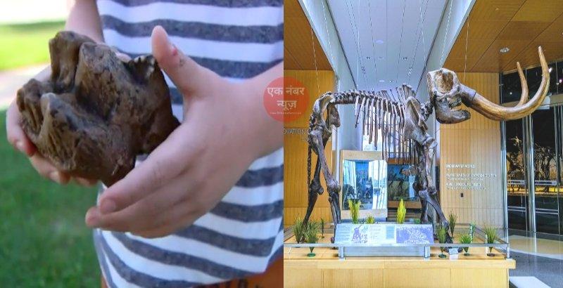 Mastodon tooth at Michigan