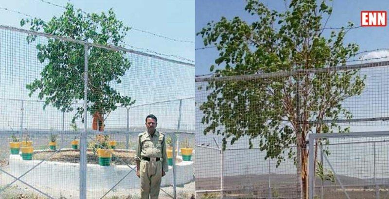 VVIP Tree Raisen MP